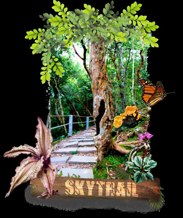 homepage_skytrail_01